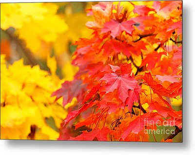 Autumn Is Beautiful Metal Print