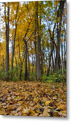 Autumn Is Here Metal Print by Sebastian Musial