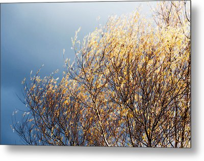 Autumn Is Leaving Metal Print by Gwyn Newcombe