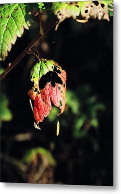 Metal Print featuring the photograph Autumn Leaf by Cathy Mahnke