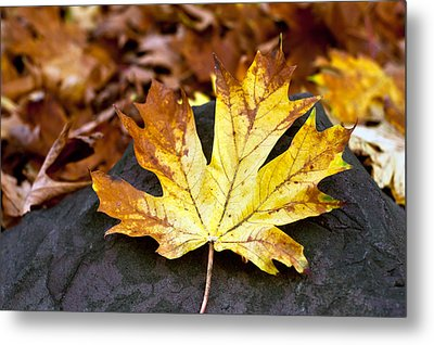 Autumn Leaf Metal Print