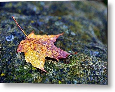 Autumn Leaf On Rocky Ledge Metal Print