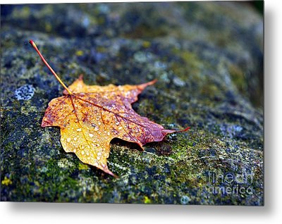 Autumn Leaf On Rocky Ledge Metal Print by Terri Gostola