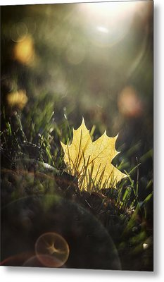 Autumn Leaf Sunset Metal Print