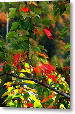 Autumn Leaves At St. Ann's Bay Metal Print by Janet Ashworth