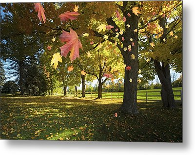 Autumn Leaves Blowing In The Breeze In Metal Print