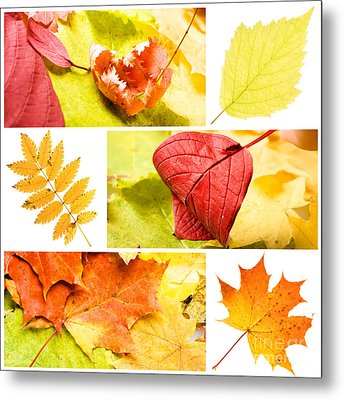Autumn Leaves Metal Print by Boon Mee