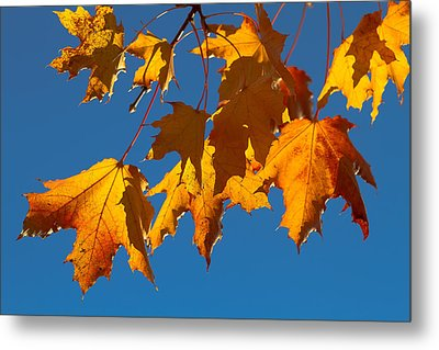 Metal Print featuring the photograph Autumn Leaves by Dennis Bucklin