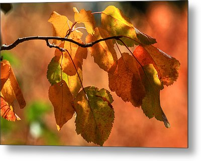 Autumn Leaves Metal Print by Donna Kennedy