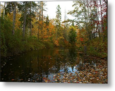 Autumn Leaves Metal Print by Julie Smith