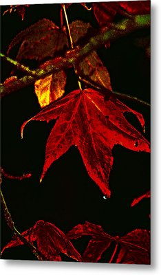 Metal Print featuring the photograph Autumn Leaves by Lesa Fine