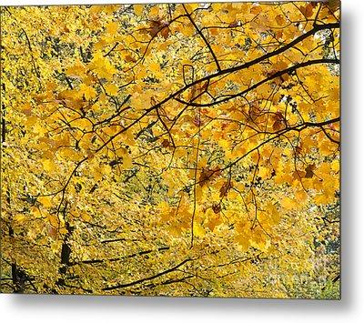 Autumn Leaves Metal Print by Michal Boubin