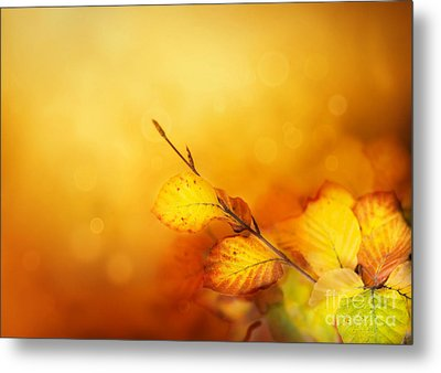 Autumn Leaves Metal Print by Mythja  Photography
