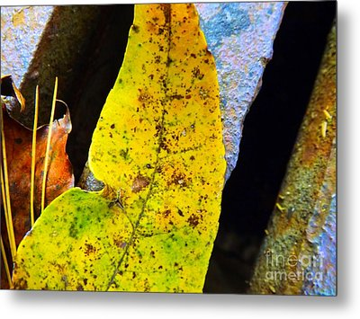 Autumn Leaves Metal Print by Robyn King