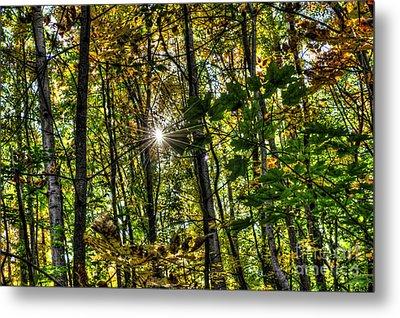Autumn Lights  Metal Print by Rich Fletcher