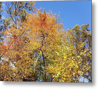 Metal Print featuring the photograph Autumn Limbs by Jason Williamson