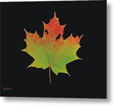 Autumn Maple Leaf 1 Metal Print