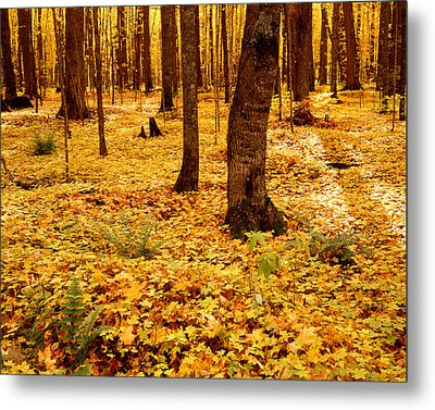 Autumn Maples Metal Print by Tim Hawkins