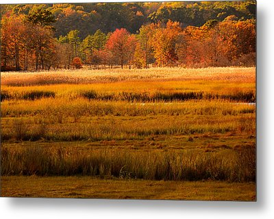 Autumn Marsh Metal Print by Raymond Salani III