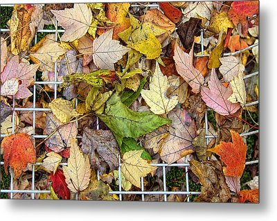 Autumn Medley Metal Print
