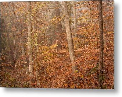 Autumn Mist Metal Print by Patrice Zinck