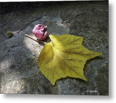 Autumn Moment Metal Print by Columbia Hillen