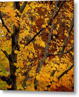 Autumn Moods 21 Metal Print