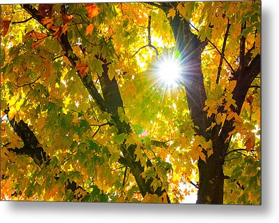 Metal Print featuring the photograph Autumn Morn by Dee Dee  Whittle