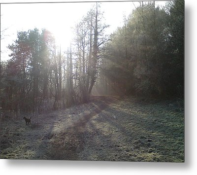 Autumn Morning 3 Metal Print by David Stribbling
