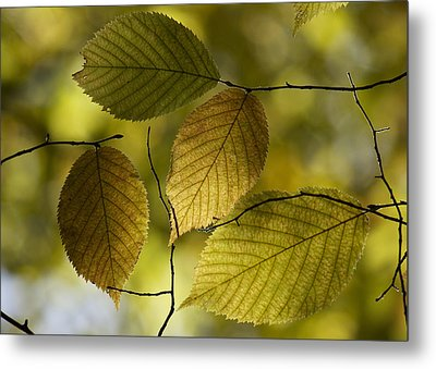 Autumn Mosaic Metal Print by Penny Meyers