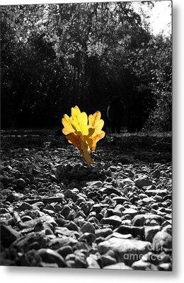 Autumn Oak Isolations Metal Print by Terri Waters
