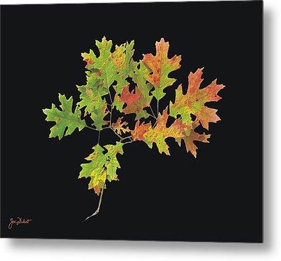 Autumn Oak Leaves Metal Print