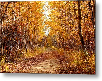 Autumn On The Harte Trail Metal Print by Larry Trupp