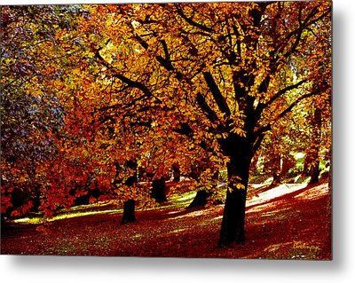 Metal Print featuring the photograph Autumn On Wombat Hill II by Chris Armytage