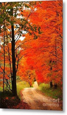 Metal Print featuring the photograph Autumn Orange 2 by Terri Gostola