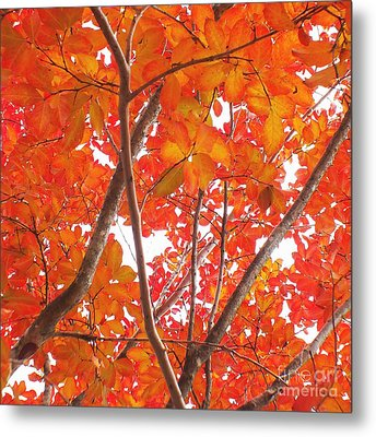Autumn Orange Metal Print by Scott Cameron
