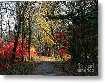 Autumn Paths    No.2 Metal Print
