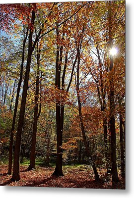 Metal Print featuring the photograph Autumn Picnic by Debbie Oppermann