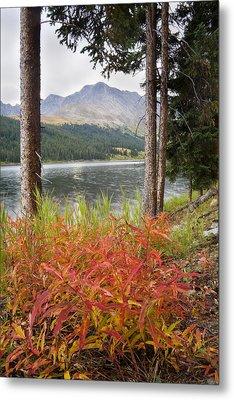 Autumn Quandry Metal Print by Morris  McClung