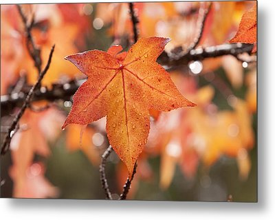 Autumn Rain Metal Print by Michelle Wrighton