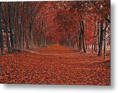 Autumn Metal Print by Raymond Salani III
