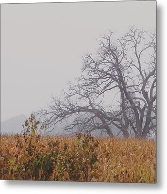 Metal Print featuring the photograph Autumn Reborn by Nikki McInnes