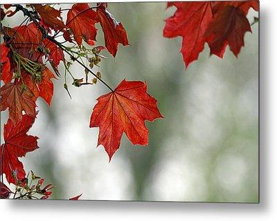 Autumn Red Metal Print by Karol Livote