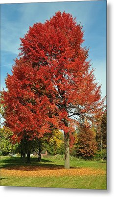 Autumn Red Metal Print by Frozen in Time Fine Art Photography