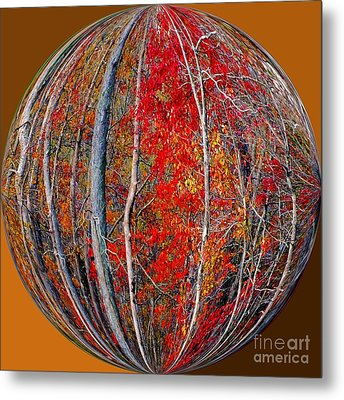 Autumn Reds Metal Print by Scott Cameron