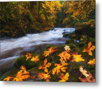 Autumn Returns Metal Print by Darren  White