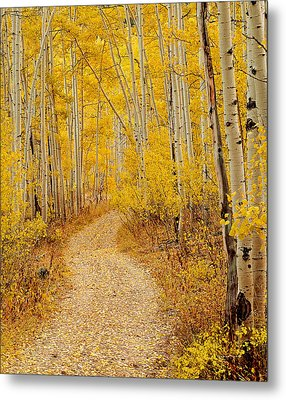 Autumn Road Metal Print by Leland D Howard