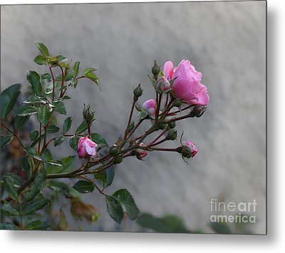 Autumn Rose Metal Print by Lutz Baar
