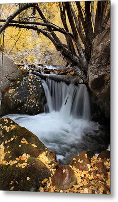 Autumn Rush Metal Print by Darryl Wilkinson