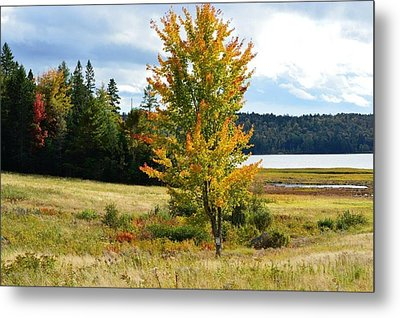 Autumn Shores Of Maine Metal Print by Lena Hatch